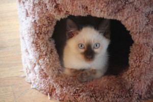 Mocha in Cat House